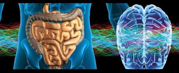 anapnoes.gr : timthumb Πως η σύνδεση εγκεφάλου και εντέρου επηρεάζει την ψυχική ευεξία