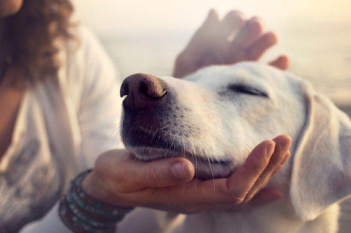 Ν' αγαπάς σαν σκύλος. H μόνη επικίνδυνη ράτσα είναι η ανθρώπινη.